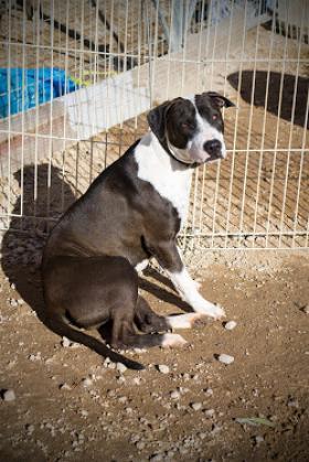 Maxcotea | Foto de KATHERINE - Perro, Raza: Otro | KATHERINE BUSCA UNA BUENA FAMILIA | Maxcotea, Adopción de mascotas. Adopción de perros. Adopción de gatos.