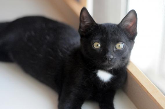 Maxcotea | Foto de DIGIT EN ADOPCION - Gato, Raza: Otro | DIGIT EN ADOPCION | Maxcotea, Adopción de mascotas. Adopción de perros. Adopción de gatos.