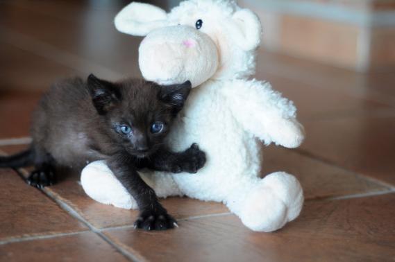 Maxcotea | Foto de HARRY EN ADOPCION - Gato, Raza: Otro | HARRY EN ADOPCION | Maxcotea, Adopción de mascotas. Adopción de perros. Adopción de gatos.