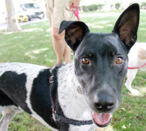 Maxcotea | Foto de Tano - Perro, Raza: Otro | Tano. | Maxcotea, Adopción de mascotas. Adopción de perros. Adopción de gatos.