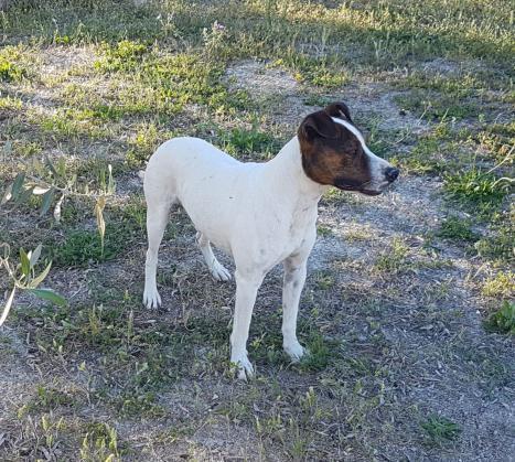 Maxcotea | Foto de bobi - Perro, Raza: Otro | Bobi. | Maxcotea, Adopción de mascotas. Adopción de perros. Adopción de gatos.