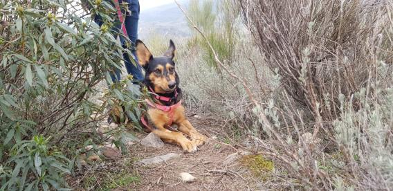 Maxcotea   Foto de Shiva - Perro, Raza: Otro   Shiva   Maxcotea, Adopción de mascotas. Adopción de perros. Adopción de gatos.