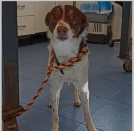 Maxcotea | Foto de Thai - Perro, Raza: Otro | Maxcotea, Adopción de mascotas. Adopción de perros. Adopción de gatos.