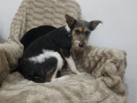 Maxcotea | Foto de Velvet - Perro, Raza: Otro | Maxcotea, Adopción de mascotas. Adopción de perros. Adopción de gatos.