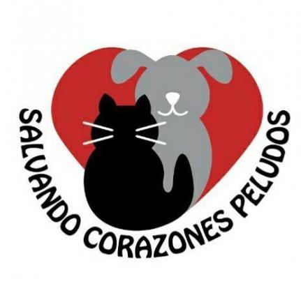 Maxcotea | Foto del maxcotero Salvando_Corazones_Peludos | Maxcotea, Adopción de mascotas. Adopción de perros. Adopción de gatos.