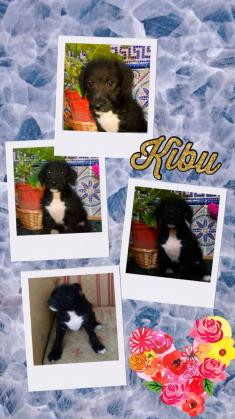 Maxcotea   Foto de kibu - Perro, Raza: Otro   kibu.   Maxcotea, Adopción de mascotas. Adopción de perros. Adopción de gatos.