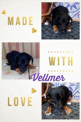 Maxcotea | Foto de vellmer - Perro, Raza: Otro | Maxcotea, Adopción de mascotas. Adopción de perros. Adopción de gatos.