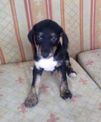 Maxcotea | Foto de seth - Perro, Raza: Otro | Maxcotea, Adopción de mascotas. Adopción de perros. Adopción de gatos.