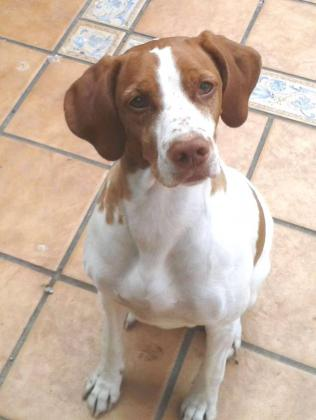 Maxcotea | Foto de Brenda - Perro, Raza: Otro | Maxcotea, Adopción de mascotas. Adopción de perros. Adopción de gatos.