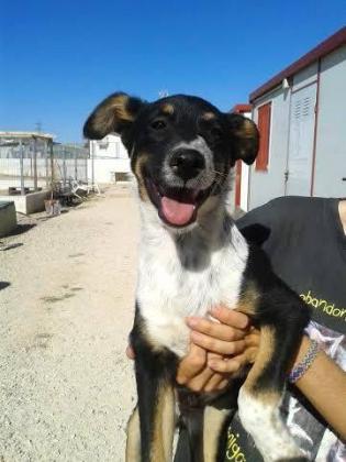 Maxcotea | Foto de Tax - Perro, Raza: Otro | Maxcotea, Adopción de mascotas. Adopción de perros. Adopción de gatos.