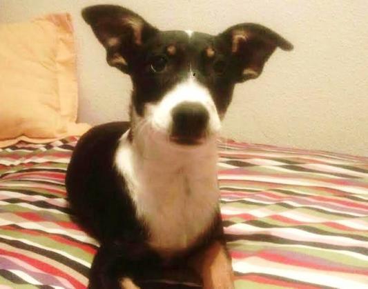 Maxcotea | Foto de sprocket - Perro, Raza: Otro | Maxcotea, Adopción de mascotas. Adopción de perros. Adopción de gatos.