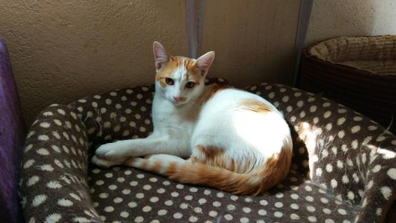 Maxcotea | Foto de SAMY - Gato, Raza: Otro | Maxcotea, Adopción de mascotas. Adopción de perros. Adopción de gatos.