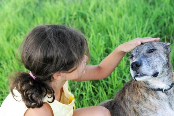 Maxcotea | Foto de NAIROBI EN ADOPCION - Perro, Raza: Otro | NAIROBI EN ADOPCION | Maxcotea, Adopción de mascotas. Adopción de perros. Adopción de gatos.
