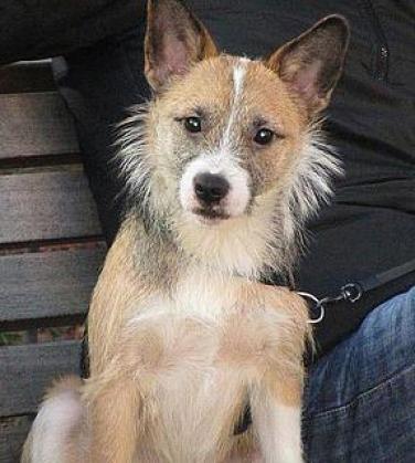 Maxcotea | Foto de Dante - Perro, Raza: Otro | Maxcotea, Adopción de mascotas. Adopción de perros. Adopción de gatos.