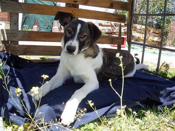 Maxcotea | Foto de Das - Perro, Raza: Otro | Maxcotea, Adopción de mascotas. Adopción de perros. Adopción de gatos.