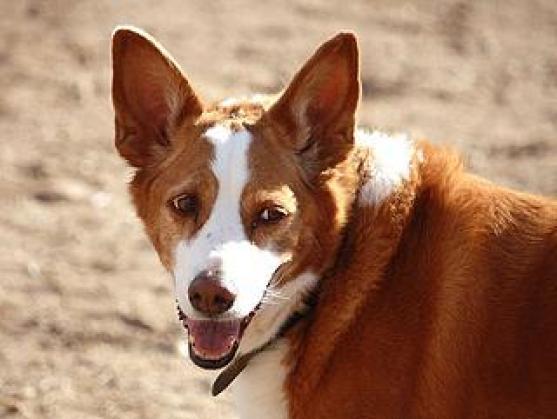 Maxcotea | Foto de Dela - Perro, Raza: Otro | Maxcotea, Adopción de mascotas. Adopción de perros. Adopción de gatos.