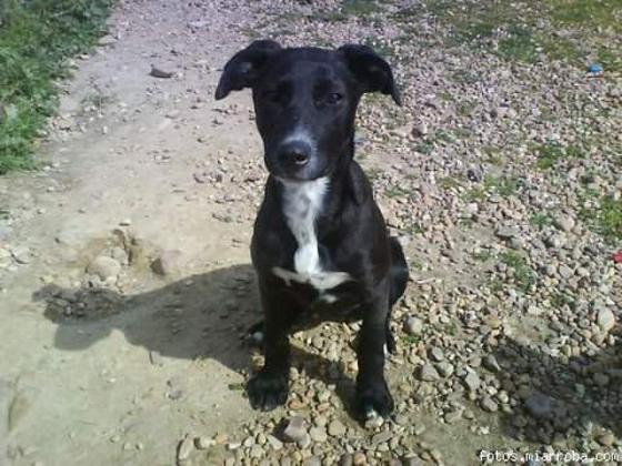 Maxcotea | Foto de Ella - Perro, Raza: Otro | Maxcotea, Adopción de mascotas. Adopción de perros. Adopción de gatos.