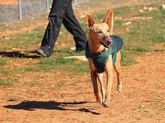 Maxcotea | Foto de Gaby - Perro, Raza: Otro | Maxcotea, Adopción de mascotas. Adopción de perros. Adopción de gatos.