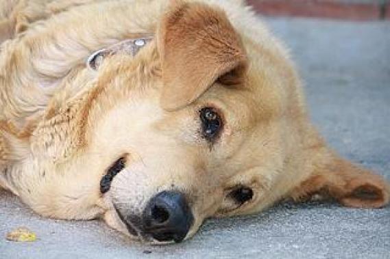 Maxcotea | Foto de Izan - Perro, Raza: Otro | Maxcotea, Adopción de mascotas. Adopción de perros. Adopción de gatos.