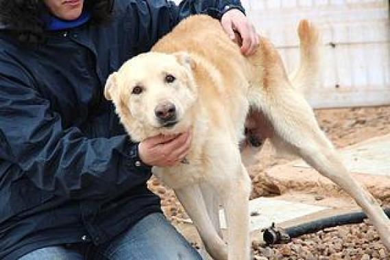 Maxcotea | Foto de Jaky - Perro, Raza: Otro | Maxcotea, Adopción de mascotas. Adopción de perros. Adopción de gatos.