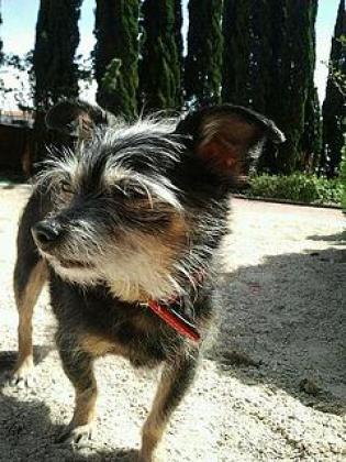Maxcotea | Foto de Kira - Perro, Raza: Otro | Maxcotea, Adopción de mascotas. Adopción de perros. Adopción de gatos.