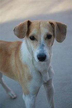 Maxcotea | Foto de Land - Perro, Raza: Otro | Maxcotea, Adopción de mascotas. Adopción de perros. Adopción de gatos.