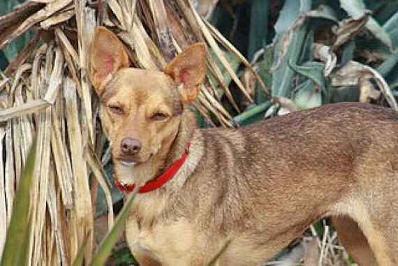 Maxcotea | Foto de Lauri - Perro, Raza: Otro | Maxcotea, Adopción de mascotas. Adopción de perros. Adopción de gatos.