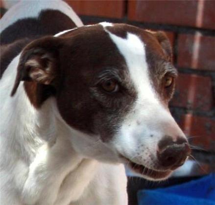 Maxcotea | Foto de Leire - Perro, Raza: Otro | Maxcotea, Adopción de mascotas. Adopción de perros. Adopción de gatos.