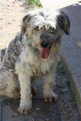 Maxcotea | Foto de Link - Perro, Raza: Otro | Maxcotea, Adopción de mascotas. Adopción de perros. Adopción de gatos.