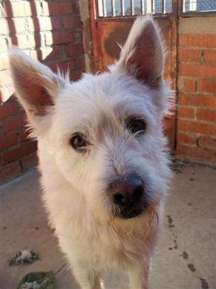 Maxcotea | Foto de Logan - Perro, Raza: Otro | Maxcotea, Adopción de mascotas. Adopción de perros. Adopción de gatos.