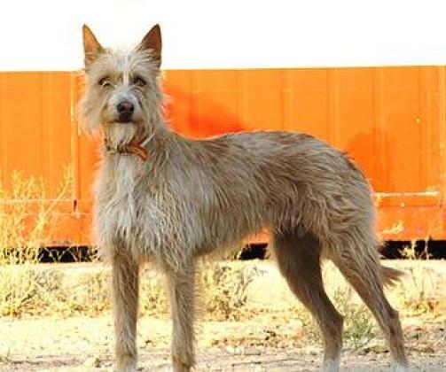 Maxcotea | Foto de Matrix - Perro, Raza: Otro | Maxcotea, Adopción de mascotas. Adopción de perros. Adopción de gatos.