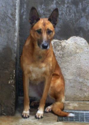 Maxcotea | Foto de DEBRA - Perro, Raza: Otro | Maxcotea, Adopción de mascotas. Adopción de perros. Adopción de gatos.