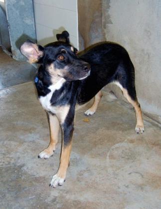 Maxcotea | Foto de KENIA - Perro, Raza: Otro | Maxcotea, Adopción de mascotas. Adopción de perros. Adopción de gatos.