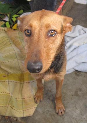 Maxcotea | Foto de JARNA - Perro, Raza: Otro | Maxcotea, Adopción de mascotas. Adopción de perros. Adopción de gatos.