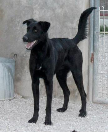 Maxcotea | Foto de GARSON - Perro, Raza: Otro | Maxcotea, Adopción de mascotas. Adopción de perros. Adopción de gatos.