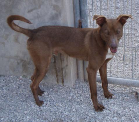 Maxcotea | Foto de CHIRI - Perro, Raza: Otro | Maxcotea, Adopción de mascotas. Adopción de perros. Adopción de gatos.