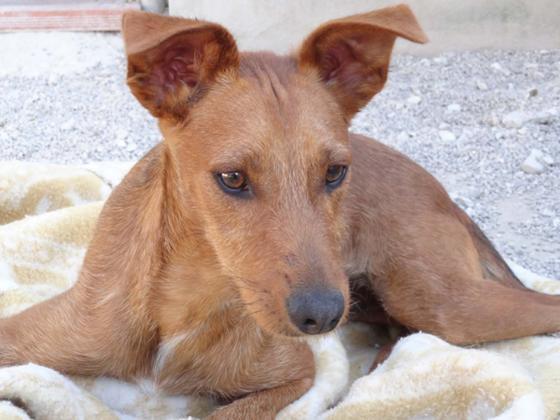 Maxcotea | Foto de FALCO - Perro, Raza: Otro | Maxcotea, Adopción de mascotas. Adopción de perros. Adopción de gatos.
