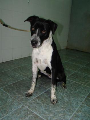 Maxcotea | Foto de MICKY - Perro, Raza: Otro | Maxcotea, Adopción de mascotas. Adopción de perros. Adopción de gatos.