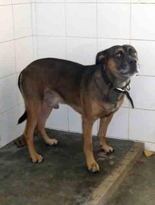 Maxcotea | Foto de KIN - Perro, Raza: Otro | Maxcotea, Adopción de mascotas. Adopción de perros. Adopción de gatos.