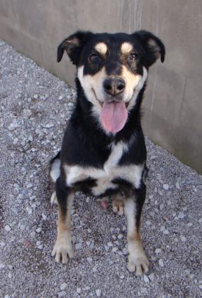 Maxcotea | Foto de ALARES - Perro, Raza: Otro | Maxcotea, Adopción de mascotas. Adopción de perros. Adopción de gatos.