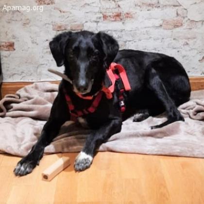 Maxcotea | Foto de Coque - Perro, Raza: Sin Raza o Mestizos | Coque | Maxcotea, Adopción de mascotas. Adopción de perros. Adopción de gatos.