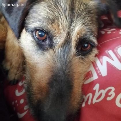 Maxcotea | Foto de Leiva - Perro, Raza: Sin Raza o Mestizos | Maxcotea, Adopción de mascotas. Adopción de perros. Adopción de gatos.