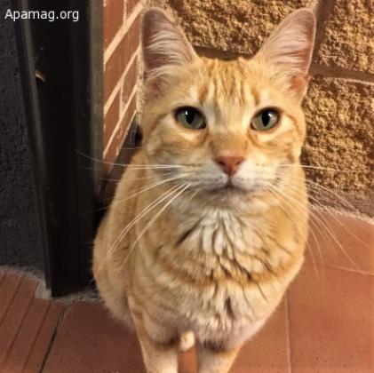 Maxcotea | Foto de Oliver - Gato, Raza: Gato común europeo | Maxcotea, Adopción de mascotas. Adopción de perros. Adopción de gatos.