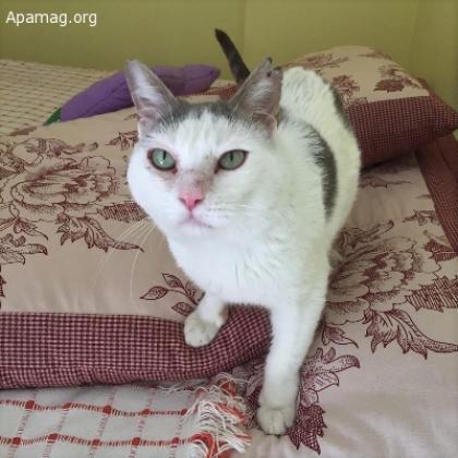 Maxcotea | Foto de Nicky - Gato, Raza: Gato común europeo | Maxcotea, Adopción de mascotas. Adopción de perros. Adopción de gatos.