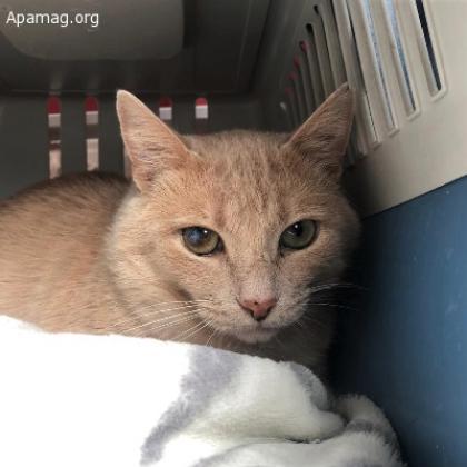 Maxcotea | Foto de Morse - Gato, Raza: Gato común europeo | Maxcotea, Adopción de mascotas. Adopción de perros. Adopción de gatos.