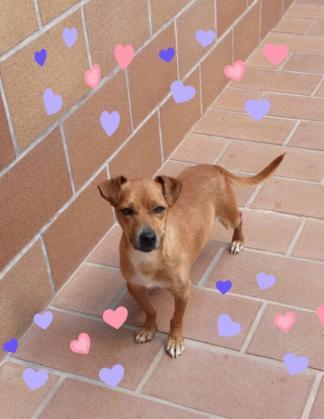 Maxcotea | Foto de Luken - Perro, Raza: Otro | Maxcotea, Adopción de mascotas. Adopción de perros. Adopción de gatos.
