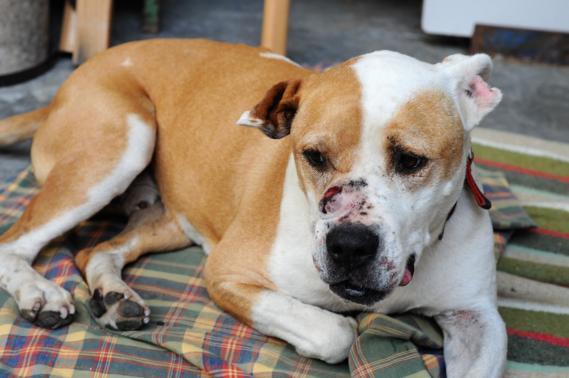 Maxcotea | Foto de SIRIUS EN ACOGIDA O ADOPCION - Perro, Raza: Otro | Maxcotea, Adopción de mascotas. Adopción de perros. Adopción de gatos.