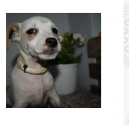 Maxcotea | Foto de Atreyu - Perro, Raza: Otro | Maxcotea, Adopción de mascotas. Adopción de perros. Adopción de gatos.
