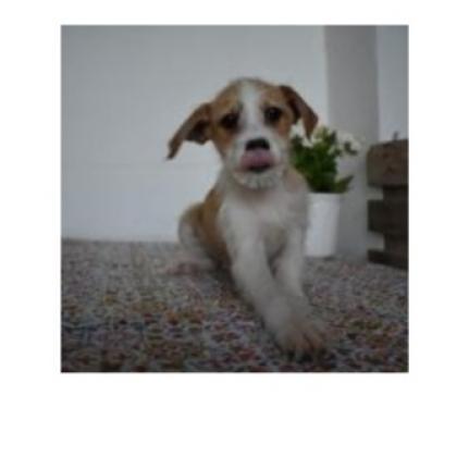 Maxcotea | Foto de Bryan - Perro, Raza: Otro | Maxcotea, Adopción de mascotas. Adopción de perros. Adopción de gatos.