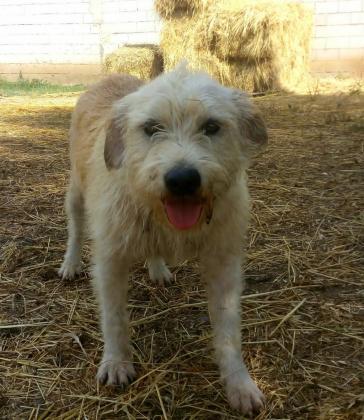 Maxcotea | Foto de Aristo - Perro, Raza: Otro | Maxcotea, Adopción de mascotas. Adopción de perros. Adopción de gatos.